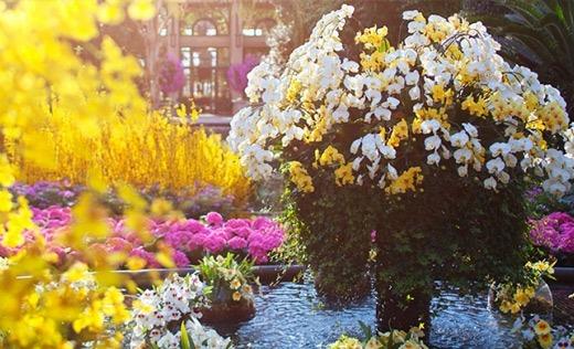 Longwood Orchid Display